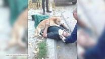 Pies nie chciał opuścić pana, nawet gdy przybyła pomoc