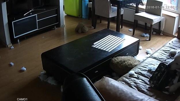 Pies nudził się, gdy został sam w domu