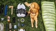 Pies podróżnik nową gwiazdą w sieci