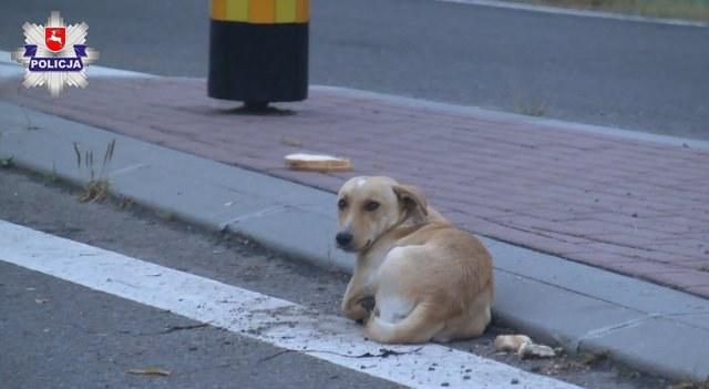 Pies porzucony w Opolu Lubelskim /Policja