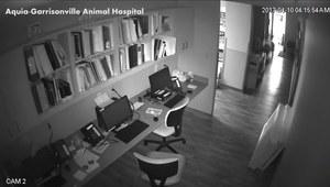 Pies postanowił uciec ze szpitala
