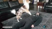 Pies potrafi wykonać sztuczne oddychanie