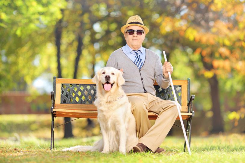 Pies przewodnik może wejść ze swoim panem do wielu miejsc /123/RF PICSEL