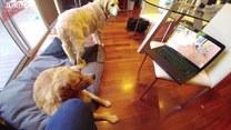 Pies zobaczył samego siebie na filmie