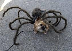 Pieskie Halloween