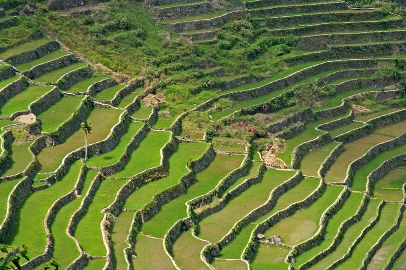Piętrowe plantacje ryżu są tak piękne, że nazywa się je ósmym cudem świata  /© Panthermedia