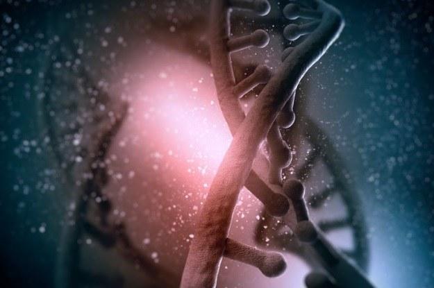 Piwo i kawa mogą wpływać na długość telomerów /©123RF/PICSEL