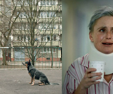 """Plan B"": Dorociński ""gada"" z psem, Preis demoluje kuchnię"