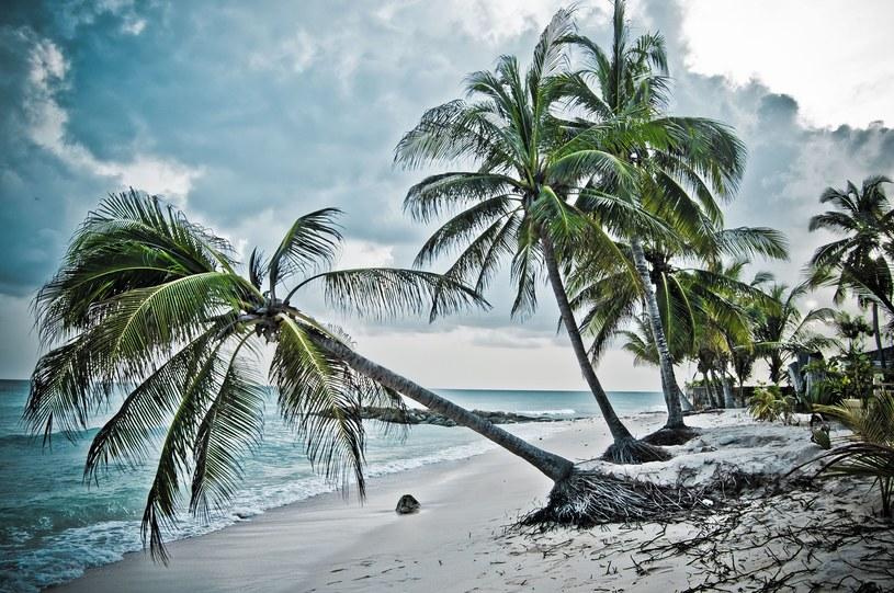 Plaża na wyspie Barbados /123/RF PICSEL