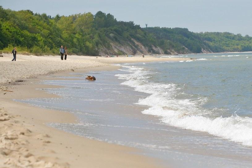 Plaża we Władysławowie jest pięknie położona, otacza ją sosnowy las, a brzeg na całej długości jest bardzo różnorodny /East News
