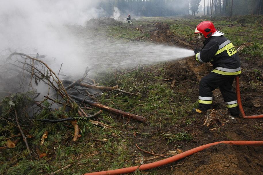 Płonie las w mazowieckim Lipsku (zdj. ilustracyjne) / Artur Reszko    /PAP