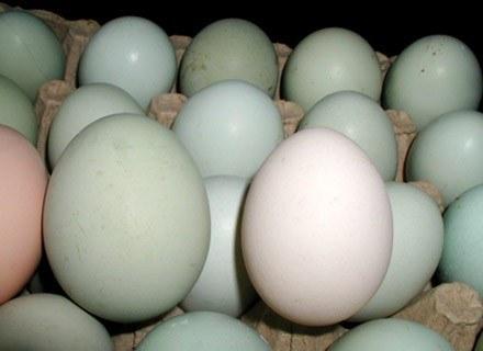 Po jajeczne kosmetyki wystarczy sięgnąć do lodówki /MWMedia