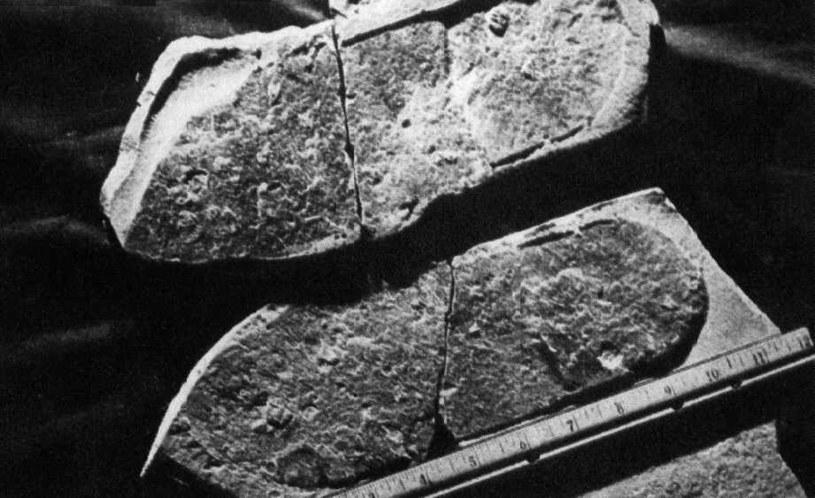 Pochodzący sprzed niemal 500 mln lat ślad przypominający odcisk buta. Znaleziono go w jednej ze skał stanu Utah. /materiały prasowe