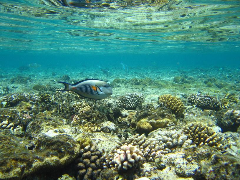 Pod wodą /materiały prasowe