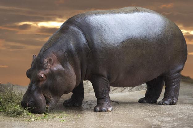 Podczas podróży do Afryki można podziwiać życie dzikich zwierząt /123/RF PICSEL