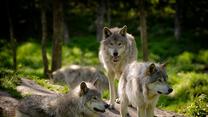 Podglądanie dzikich zwierząt online coraz bardziej popularne