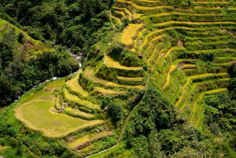 Pola ryżowe na Filipinach /123/RF PICSEL