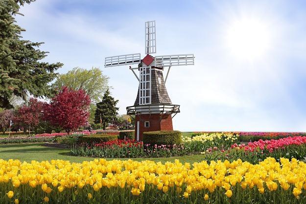 Polacy zostają często w Holandii /123RF/PICSEL