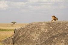Polak odkrył w Tanzanii setki malowideł naskalnych