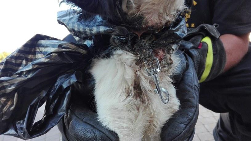 Policja prowadzi obecnie dochodzenie w sprawie psa /&nbsp