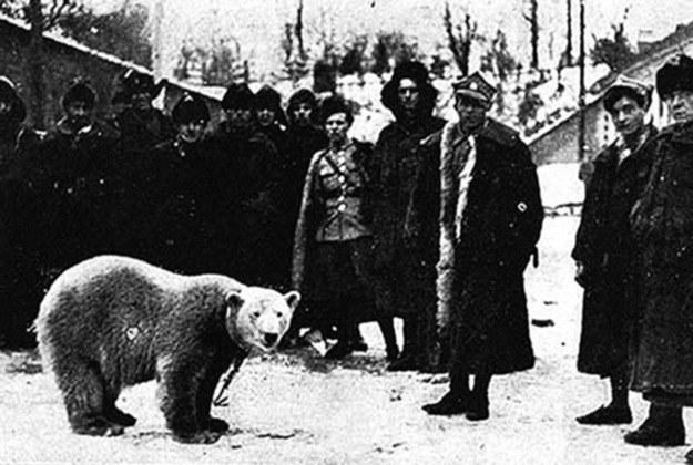 Polscy żołnierze z Baśką - niedźwiedzicą, którą kupili na północy /materiały prasowe