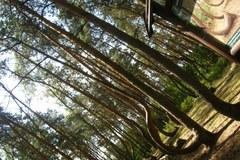 Polska niezwykła: Krzywy las w Gryfinie