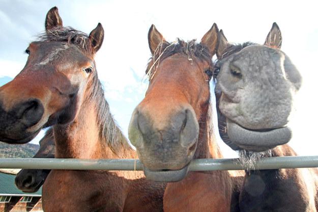Polskie konie zasługują na uhonorowanie? /Marcin Makówka /East News