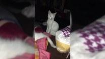 Pomylił poduszkę z własną matką