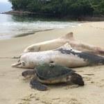 Ponad 100 martwych delfinów na brazylijskich plażach