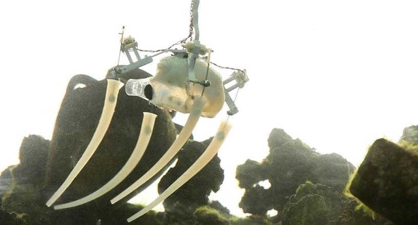 """Ponieważ ośmiornice potrafią pływać, pełzać, chwytać przedmioty i nimi manipulować, są """"idealnymi podwodnymi robotami"""" /The New York Times"""