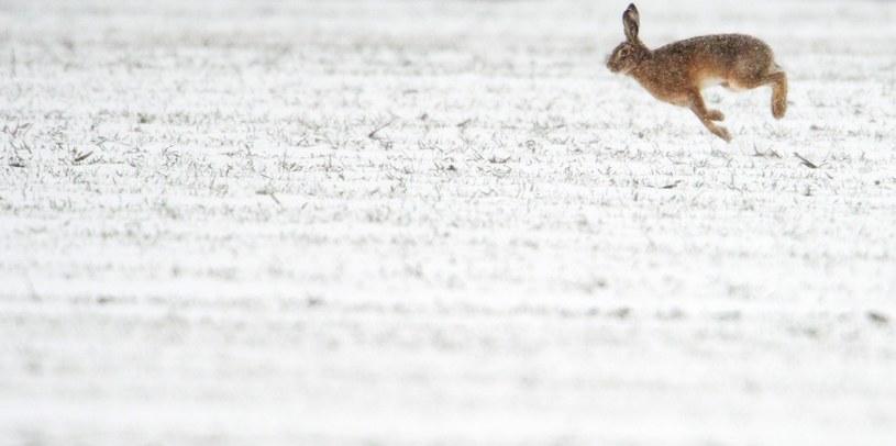 Ponowny atak zimy w Niemczech /PAP/EPA