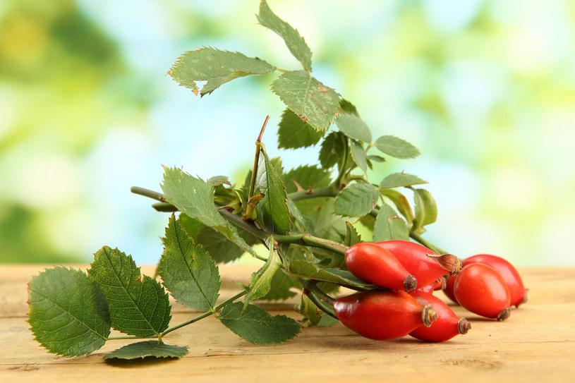 Poprzez swoje szerokie zastosowanie dzika róża jest składnikiem kosmetyków pielęgnacyjnych dla każdego rodzaju skóry /123RF/PICSEL