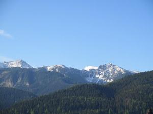 Popularny szlak w Tatrach zamknięty. Znaleziono sparaliżowanego niedźwiedzia