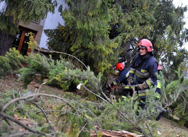 Porywisty wiatr łamie drzewa/fot. Grzegorz Momot /PAP