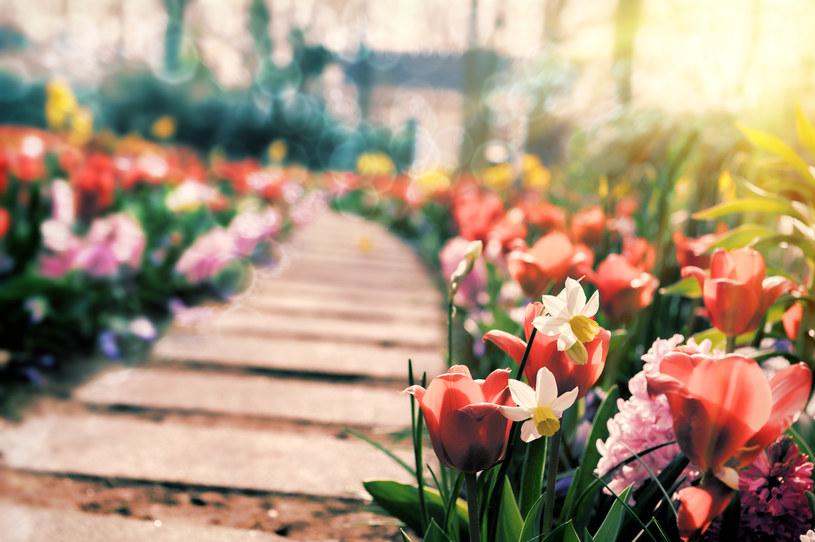 Posadz je teraz. Sąsiedzi będą ci zazdroscić na wiosnę /123RF/PICSEL