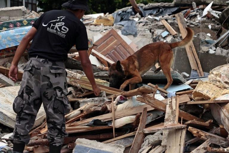 Poszukiwanie ludzi pod gruzami po trzęsieniu ziemi w Ekwadorze /Juan Cevallos / AFP /AFP