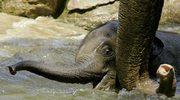 Potrzeba 24 mln pokoleń, żeby z myszy wyrósł słoń
