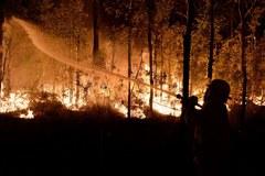 Pożar buszu w Australii