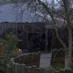 Pożar w londyńskim zoo. Zaginęło jedno egzotyczne zwierzę