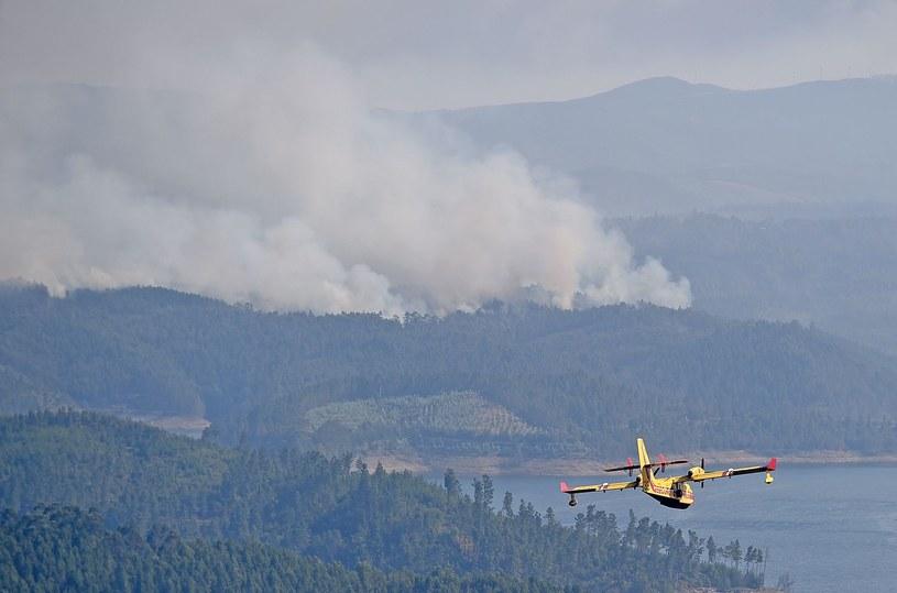 Pożary lasów w Cabril /AFP