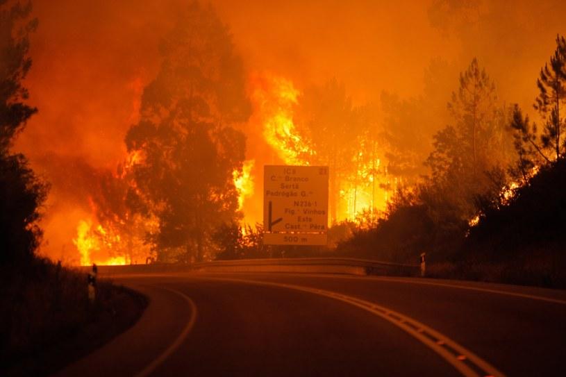 Pożary lasów w Portugalii /PAULO CUNHA /PAP/EPA