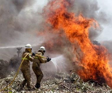 Pożary w Portugalii. Władze ogłosiły żałobę narodową