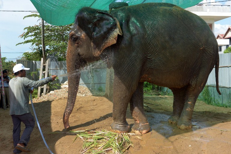 Pożegnanie słonicy było huczne /AFP