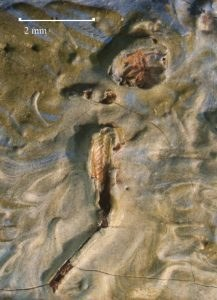 Pozostałości pasikonika uwięzione w farbie, fot. https://nelson-atkins.org /
