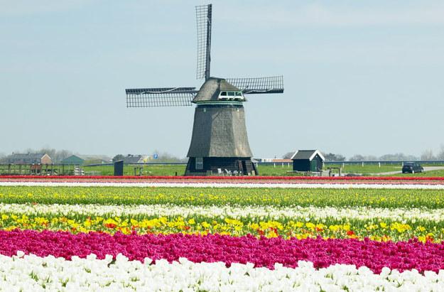 Praca w Holandii nie jest łatwa /© Panthermedia