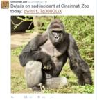 Pracownicy zoo zabili goryla, by ratować 4-latka
