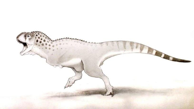 Prawdopodobnie tak wyglądął Chenanisuaurs barbaricus /materiały prasowe