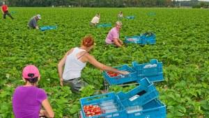 Prezydent podpisał ustawę w sprawie umowy o pracę pomocnika rolnika