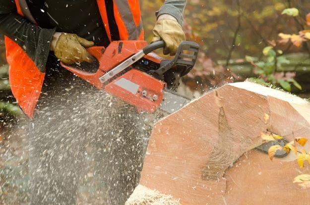Profesja drwala jest niebezpieczna, a płaca niewspółmierna do ryzyka /© Panthermedia