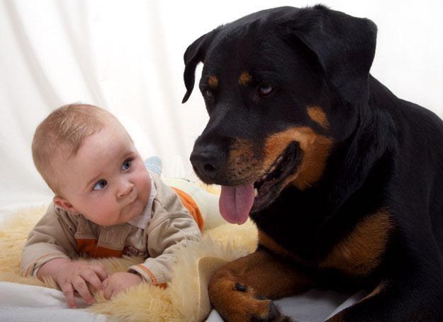 Przebywanie pod jednym dachem ze kotem, psem lub chomikiem przynosi dziecku ogromne korzyści /© Panthermedia